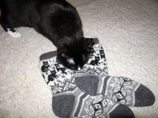 6 kuvaa kissat nuuskii lattiallaolevia uusia sukkia. Kissakuvioita!
