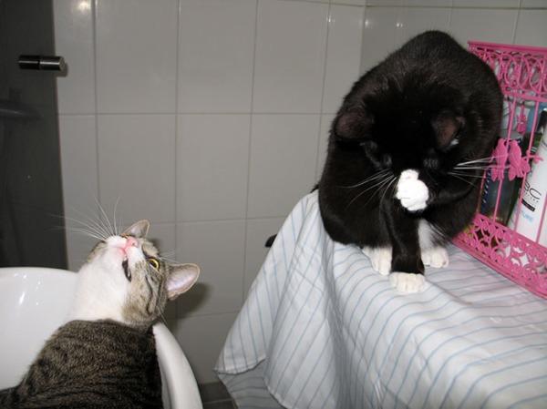 Zetor lavuaarissa, tuijottaa Ilonaa joka pese itteään pesukoneen päällä