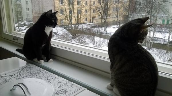 kissat akttelee ikkunasta lumisadetta