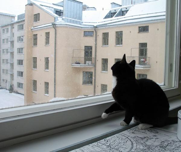 Ilona kattelee ikkunasta ja nostaa käpälää valmiina ottamaan lumihiutaleen kiinni