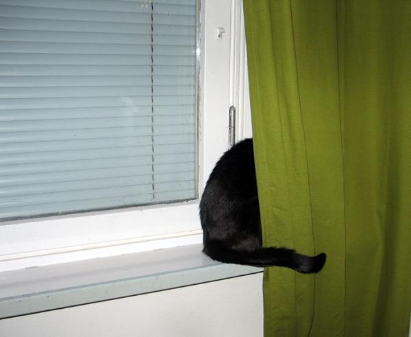 Ilona ikkunaverhon takana, vain peba ja häntä näkyy