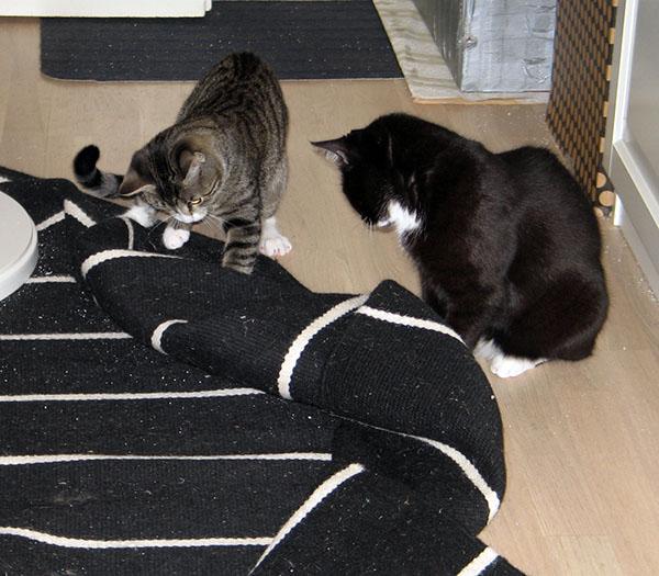 noi möyhää eteisen mattoa kasaan