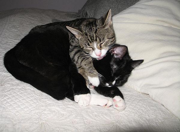 Zet pesee Ilonaa rakkaudella, Ilona yrittää nukkua