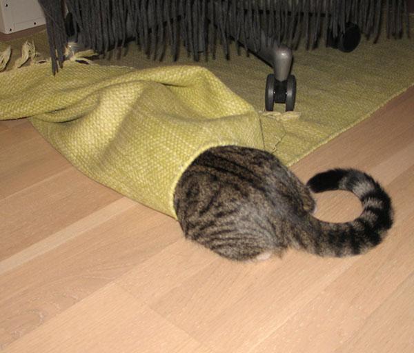 Zet kääri ittnesä maton sisään, peba ja häntä vaan näkyy