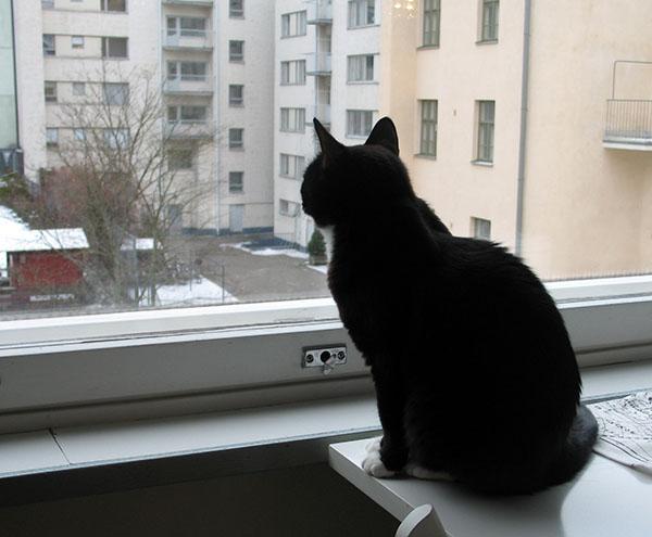 Iltsu kattoo ikkunasta ulos