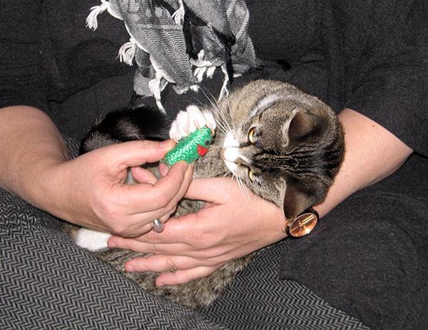 Zetor tutkii vieraan sylissa vihreaa hiirua