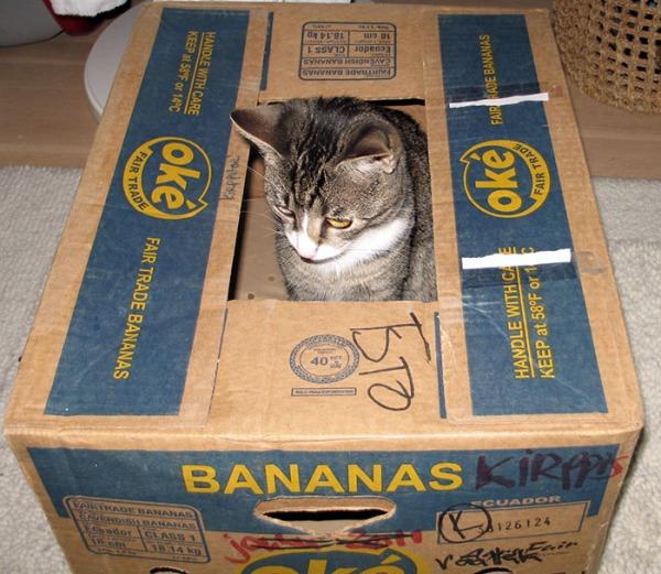 istuu laatikossa