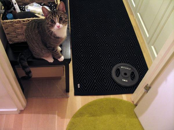 Zet kattoo kameraan ja selittää vieressään olevaa mattoa ja painoa