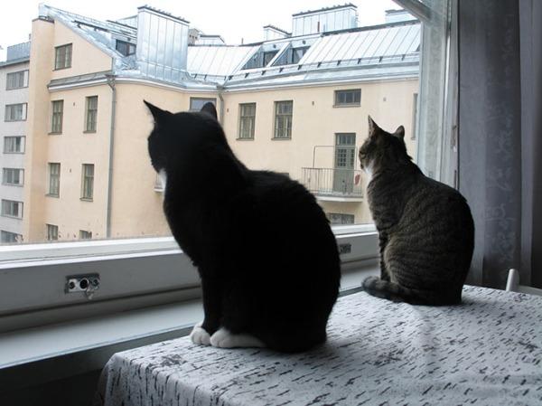 noi kaksi istuu samoissa asennoissa ikkunalla ja tuijottaa ulos