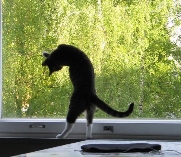 3 kuvaa kun zetor nousee pitkäksi ikkunaa vasten tavoittelemaan mitälie sitten tavoitteleekin