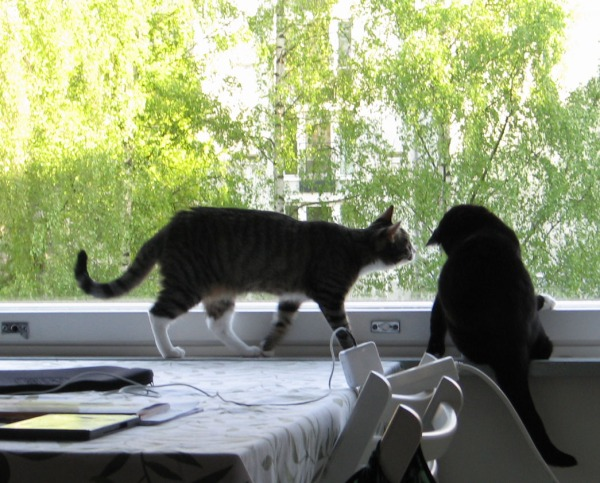 zetor uteliaana ilonan luo ikkunalaudalla. Ilonalla tosiaankin taitaa olla jotain etutassuissa