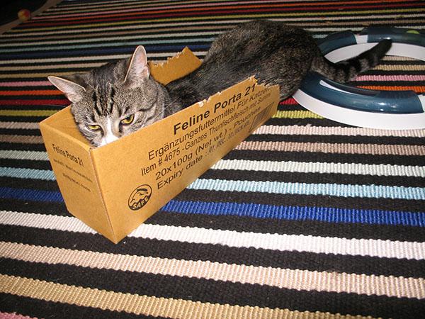 neljä kuvaa kun Zet pelehtii kissanruokalaatikossa
