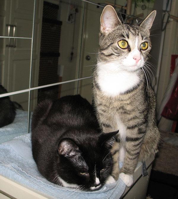 kissat laatikkopinon päällä ihan riehumatta ja nätisti