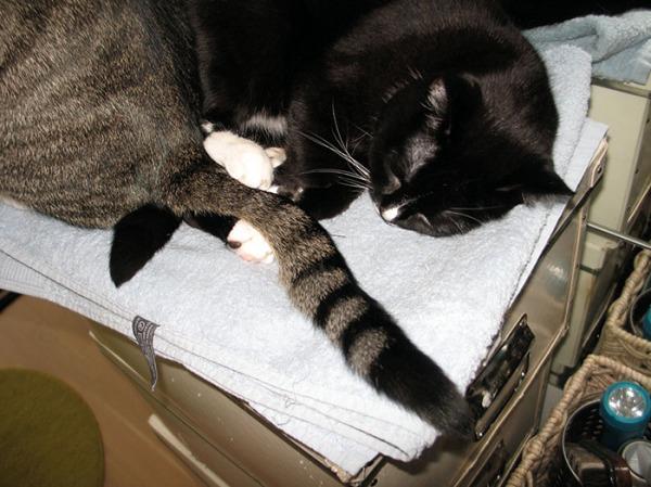 ilona meni nukkumaan laatikoiden päälle ja Zet istui viereen, jolloin Ilona otti kahdella tassulla kiinni hänen hännästä.