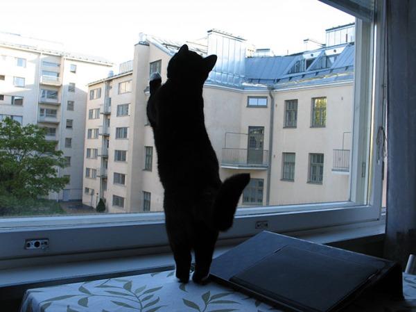 typy nojaa ikkunaan ja katsoo ylös