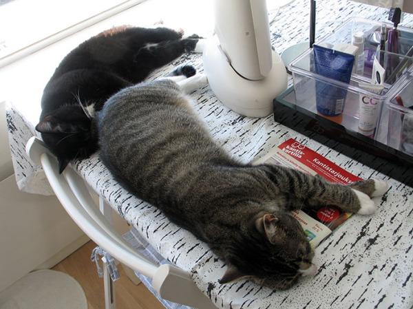 Zetor lähempänä kameraa, Ilona lähempänä ikkunaa, kissat yhtenä pitkänä pötkönä Ilonan nenä Zetorin pepun kohdalla