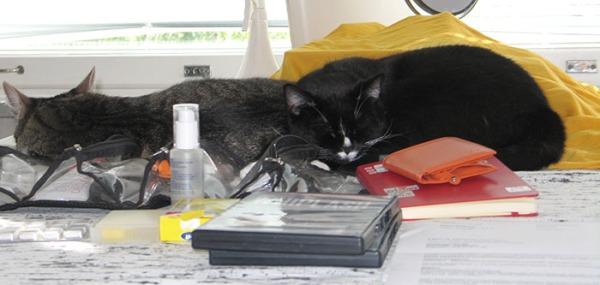 2 kuvaa kun nukkuvat vierekkäin pöydällä vähän eri asennoissa
