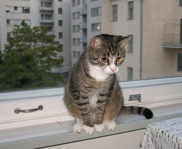 Zet istuu silmät pyöreinä ja söpönä ikkunalaudalla, tuijottaa jotain.