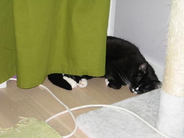 Ilona makaa lattialla osin verhon takana