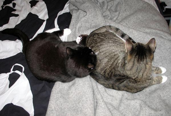 kisut nukkuu vierekkäin