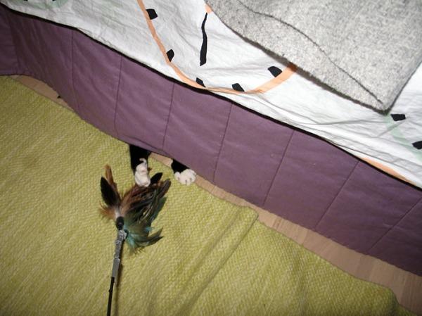 pelkät Ilonan tassut tavoittelee höyhenpuuhkaa sängynpeiton reunan alta