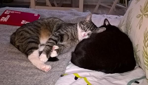 maailman tyytyväisimmän näköinen zetor nojaa nukkuvan Ilonan kylkeen, unessa