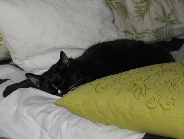 Ilona nukkuu petissä pötkönä