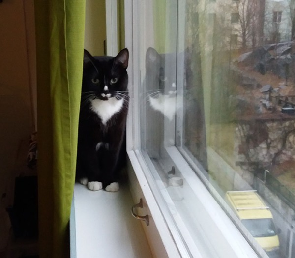 ilona istuu ikkunalaudalla verhon takana, katsoo suoraan kameraan. sama tyttö heijastuu ikkunasta. Toinen kuva seuraa, melkein sama asento.