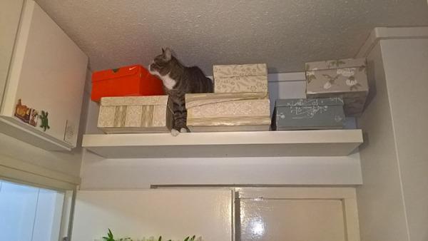 Vaikka onhan tää aika korkeella... mitenkähän täältä tullaan alas?