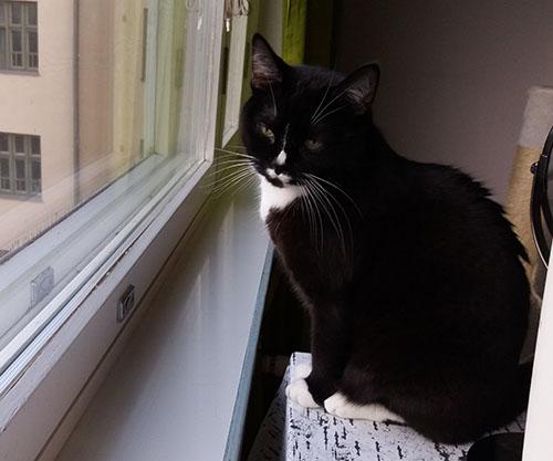 taas Ilona ikkunalla mut edelliset kuvat oli kyllä parempia. Mun uusi känny ottaa hyvii kuvia!