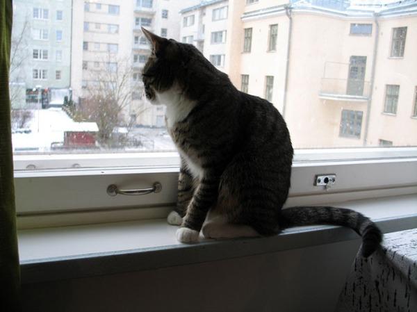 zet istuu ikkunalla tuijottamassa ulos