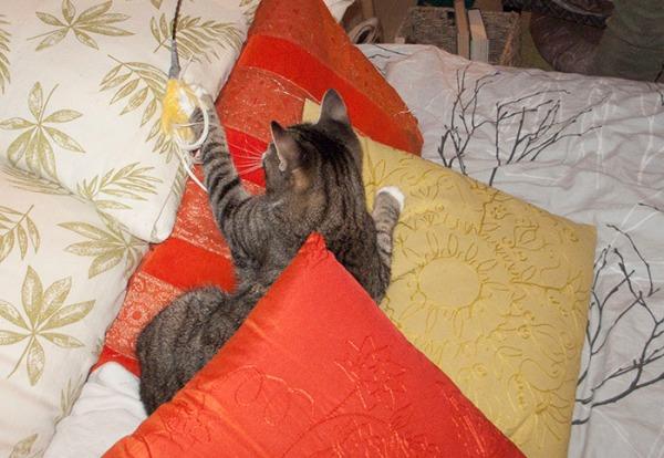 Zet tyynykasassa petillä tavoittelee huiskaa