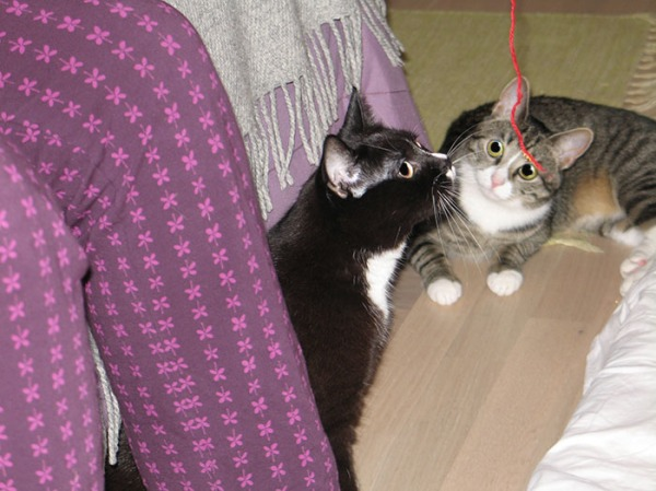 mintun jalat ja siinä vieressä kissat leikkii langalla