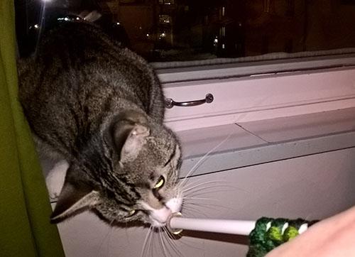 zet nuuhkii isoa neulepuikkoa, istuu itse ikkunalaudalla