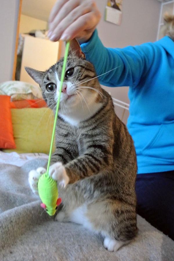 zetor tarkkailee hiirun hännän venymistä. Sehän venyy!