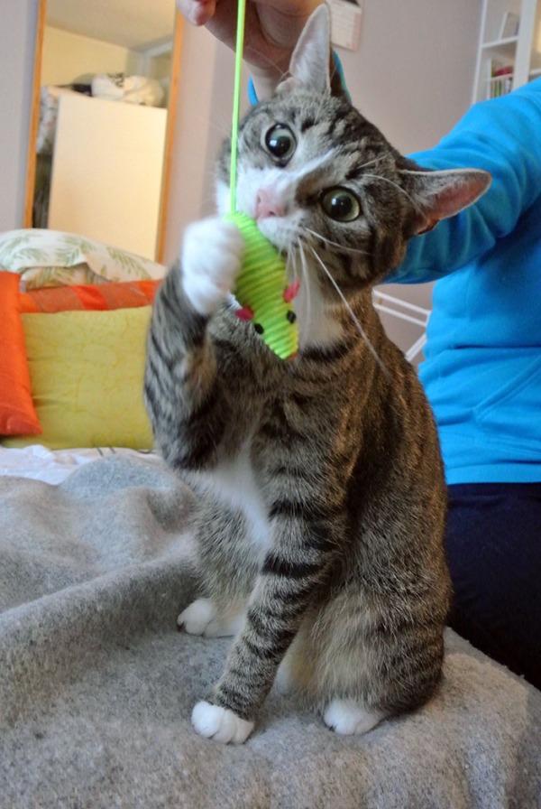Zetor syö vihreää hiirua, uusi lelu