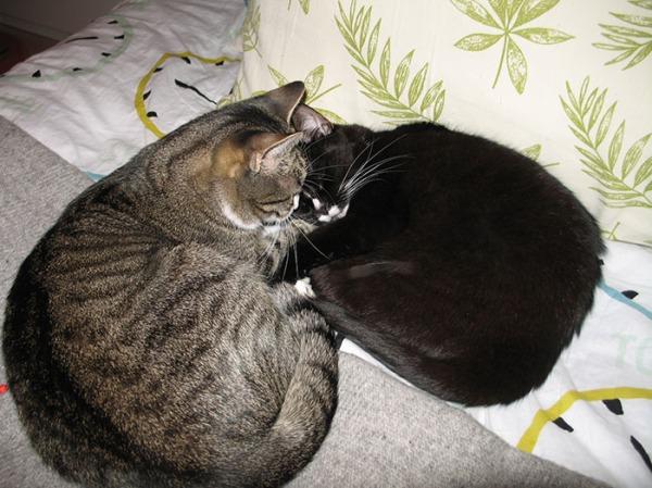 Zet pussaa Ilonaa petissä. Yhdessä muodostavat lähes sydämenmuotoisen kuvion