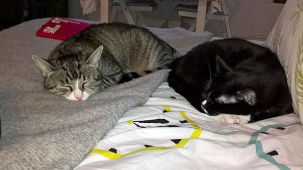 kissat nukkuu lähekkäin mutta ei vierekkäin mun petillä