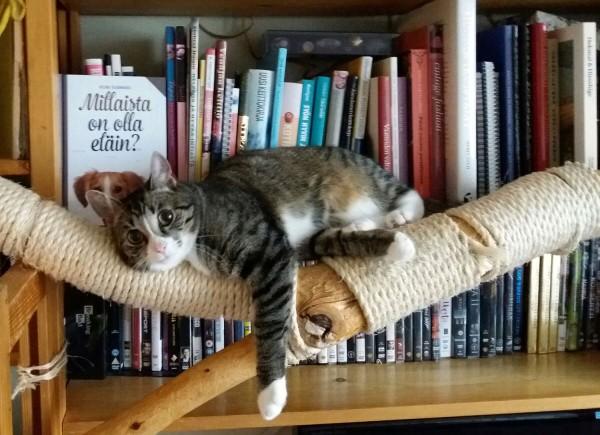 """Zet lojuu kirjahyllyssä, takana on kirja """"Millaista on olla eläin"""". Ei edes lavastettu tilanne."""