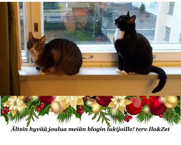 hyvän joulun toivotuskuva, kissat istuu ikkunalaudalla ja möllöttää. Alaosaan varastettu netistä vähän joulugirlandia ja laitettu toivotusteksti.