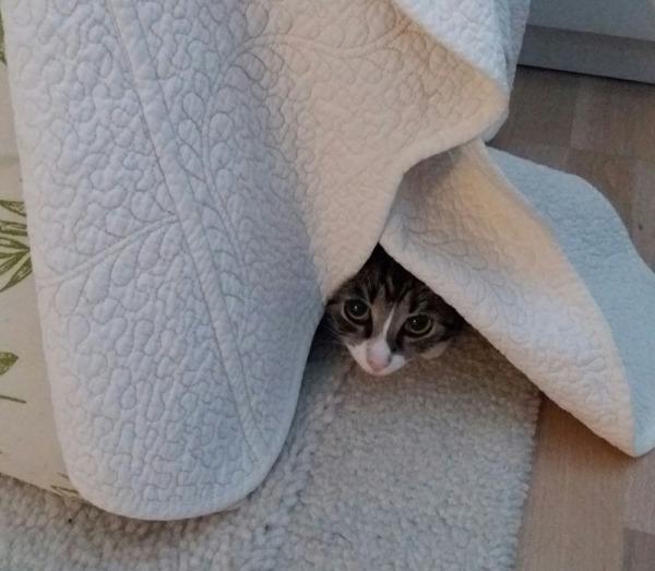 kuolen taas, nyt Zet kurkkii sängynpeitteen alta
