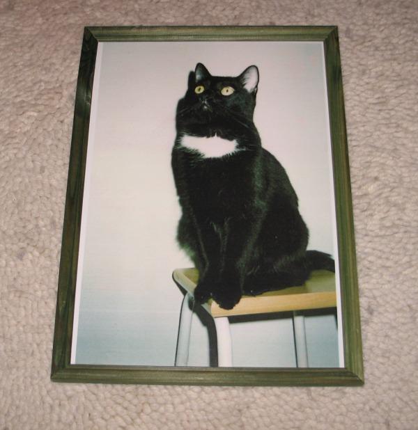 mv kissa istuu keittiötuolilla, tosi nätti ja ryhdikäs