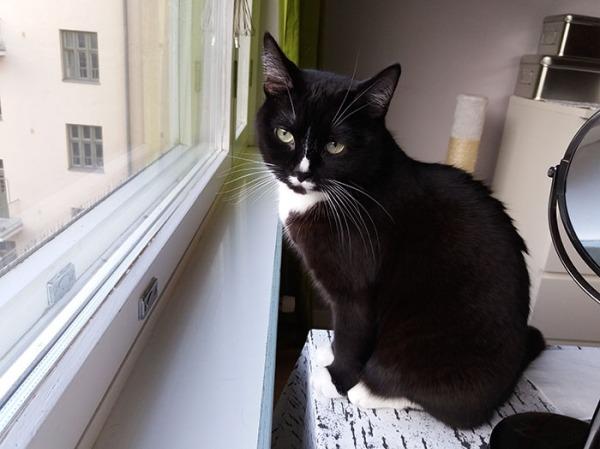 Ilona virnistelee ikkunalaudalla