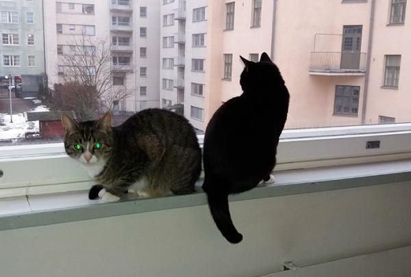 kissat ikkunalaudalla peput vastakkain, Zet katsoo kameraan
