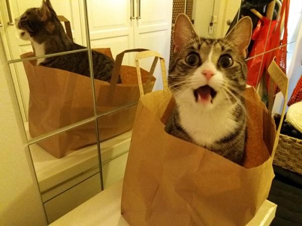 Zet istuu kassissa eteisessä suu auki, kattoo suoraan kameraan kuin selittäisi kovasti jotain