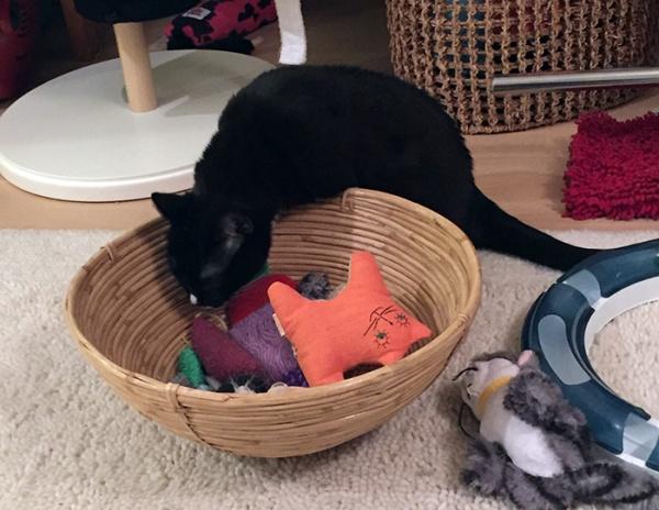 Ilona tutkii lelukoppaa