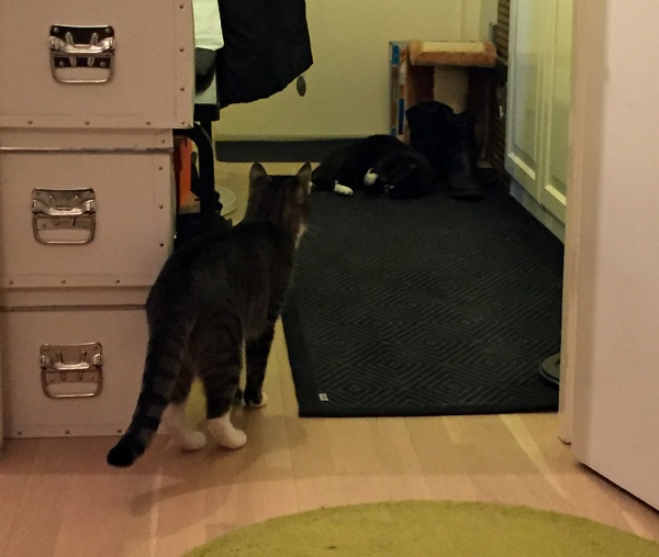 Zet tuijottaa ovelta eteisen toiseen päähän, jossa Ilona painii huolella