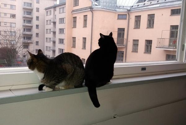 nyt ne tuijottaa ulos kumpikin
