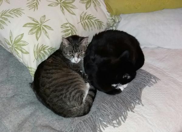 murut nukkuu tiiviisti vierekkäin harmaan viltin päällä, kaksi pyöreää muotoa