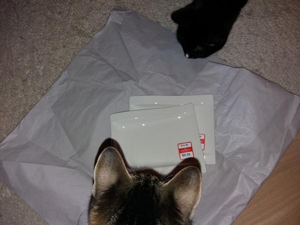 Kummankin kissan pää nuuskimassa